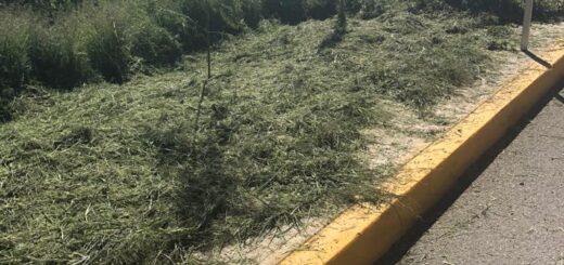 reforestación coronango