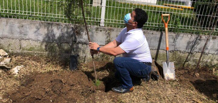 cuautlancingo reforestación