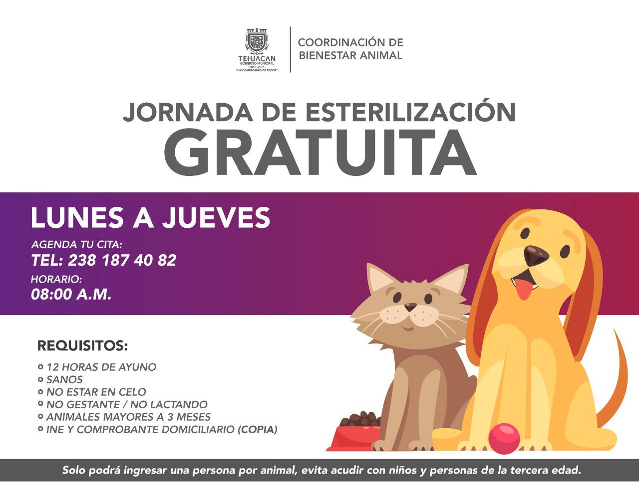 Mascotas Tehuacán